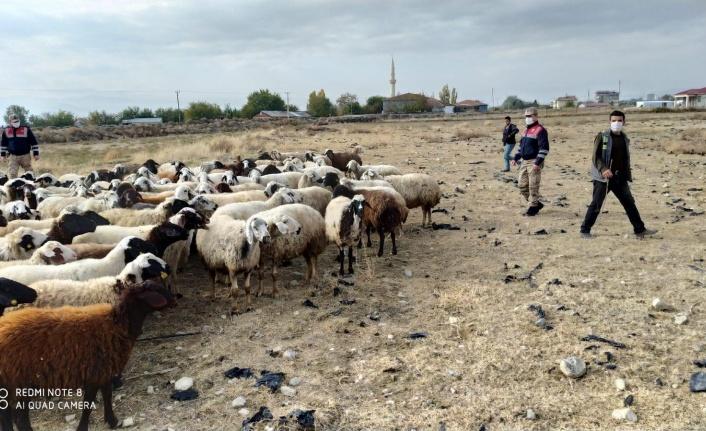 Jandarma 102 Küçükbaş Hayvanı Sahibine Teslim Etti