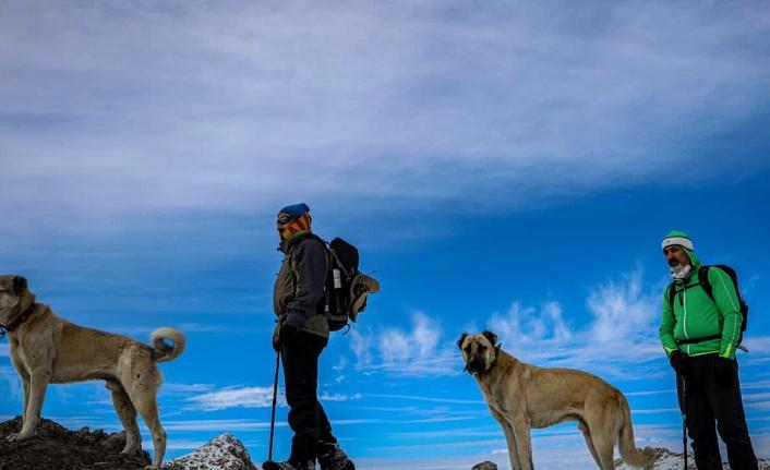 Kangallar, dağcılarla zirve yaptı