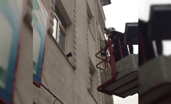 Pencere önünde mahsur kalan kediyi itfaiye kurtardı