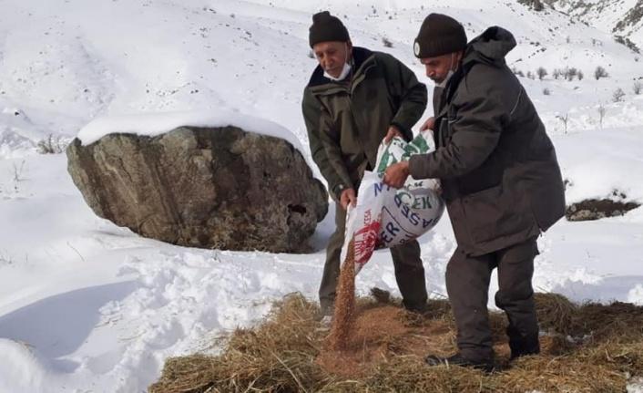 Elazığ'da yaban hayvanları için doğaya 1,5 ton yem bırakıldı