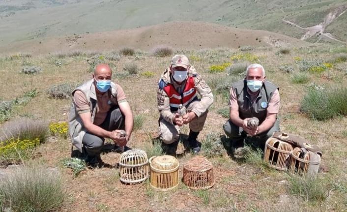 Elazığ'da kaçak avda yakalanan 3 şahsa işlem yapıldı