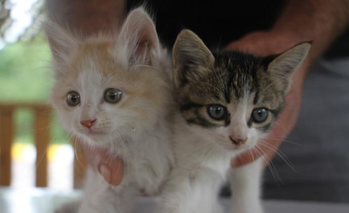 İtfaiye ekiplerinin kurtardığı yavru kedileri duyarlı vatandaş sahiplendi