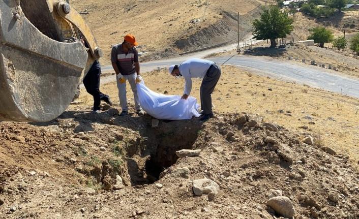Elazığ'da etrafa saçılan kemikler toplanıp kefenlendikten sonra yeniden defnedildi