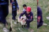 Elazığ'da kuyuya düşen kuzuyu itfaiye kurtardı