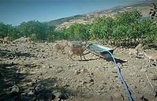 Elazığ'da yaban hayatı fotokapanla görüntülendi