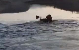 Baraj gölüne düşen güvercin, suya giren muhtar...