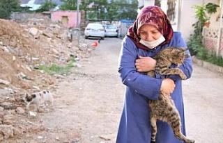 Çocukları vefat eden Fatma teyze, 35 kediye anne...