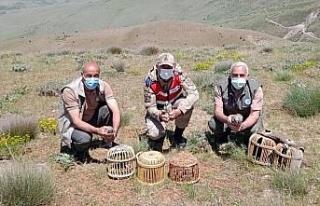 Elazığ'da kaçak avda yakalanan 3 şahsa işlem...