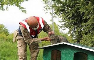 Jandarmadan, sokak hayvanlarına şefkat eli