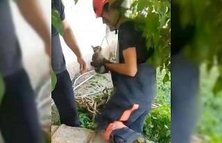 Kuyuya düşen kedi kurtarıldı