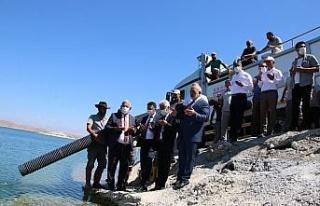 Elazığ'dan 18 kente 12 milyon yavru sazan balığı...