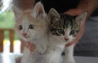 İtfaiye ekiplerinin kurtardığı yavru kedileri...