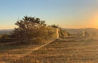 Bıldırcın yakalamak için 100 metrelik kaçak ağ...