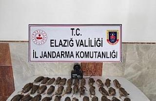 Elazığ'da kaçak bıldırcın avına 8 bin 220...