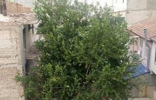 Elazığ'da şiddetli rüzgar etkili oldu, ağaçların...