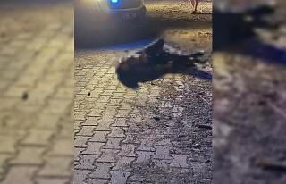 Husumetlisini öldüren şahıs polise teslim oldu