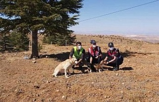 Elazığ'da jandarma ekipleri sokak hayvanlarını...