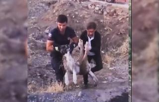 Elazığ'da yaralı halde bulunan köpek itfaiye...