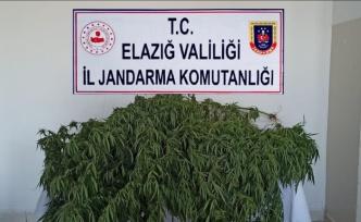 Elazığ'da uyuşturucu operasyonu: 1 gözaltı