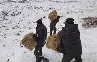 Elazığ'da yaban hayatı için yem desteği sürüyor