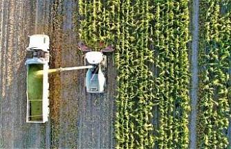 Elazığ'da 4 bin dönümlük alanda silajlık mısır hasadı başladı