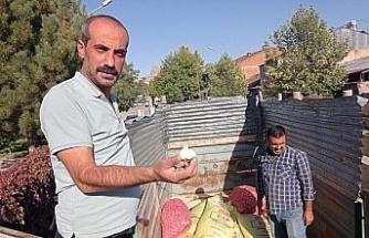 Elazığ'da çiftçilere yüzde 75 hibeli sarımsak tohumu dağıtıldı