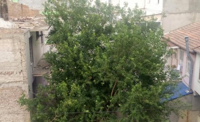 Elazığ'da şiddetli rüzgar etkili oldu, ağaçların dalları kırıldı